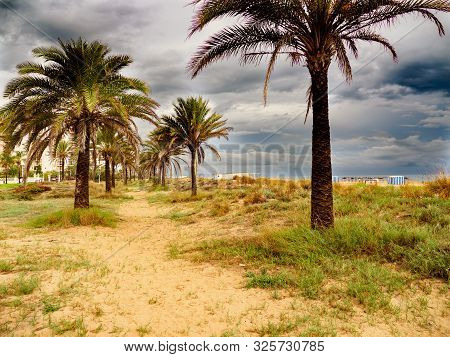 Sand Road With Palm Trees On The Beach Of Gandia, Valencia, On A Rainy And Cloudy Day.