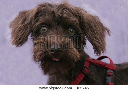 Puppy 102