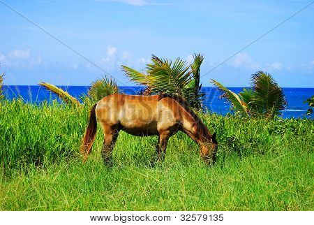 horse, eating, grass