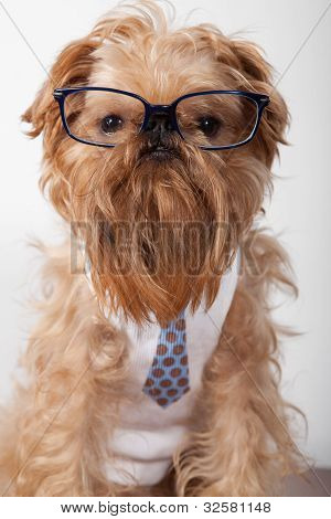 Serious dog in glasses and a shirt with a tie poster