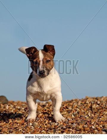 Cute Puppy On The Beach
