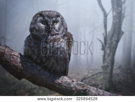 A Creepy Grey Owl On A Branch In A Mystical And Foggy Forest.