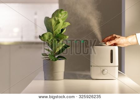 Hand Turn On Air Humidifier On The Table At Home, Water Steam Direction To A Houseplant - Ficus Lyra