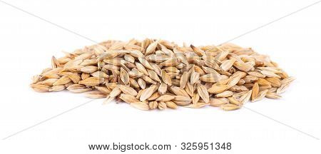 Malted Barley Grains, Isolated On White Background. Barley Seed Close Up.