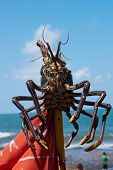 A giant lobster is dried on a stick poster