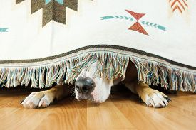 The Dog Is Hiding Under The Sofa And Afraid To Go Out. The Concept Of Dog's Anxiety About Thundersto