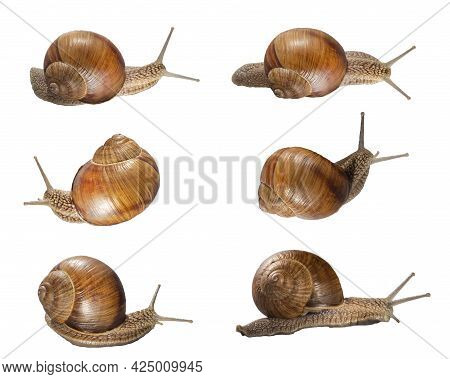 Set Of Various Position Of Grape Snails Isolated On White Background. Beautiful Grape Snails