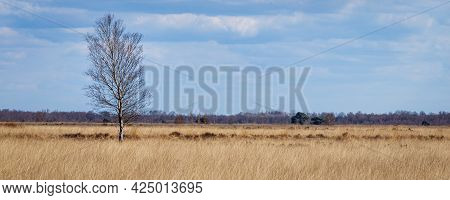 Panorama Nature Park Fochteloerveen In The Netherlands