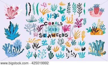 Cartoon  Big  Set With Differents Seaweeds  And Colals.  Beautiful Doodle Underwater Marine Life, Co