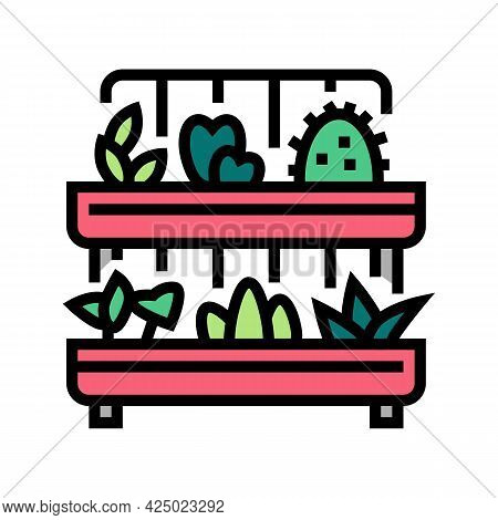 Domestic Plant In Pot Color Icon Vector. Domestic Plant In Pot Sign. Isolated Symbol Illustration