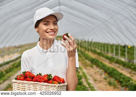 Close Up Of Young Brunette Woman In White Clothes Sniffing Fresh Ripe Strawberry And Holding Basket