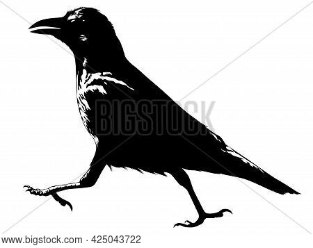 Black And White Image Of A Walking Crow Vector Illustration