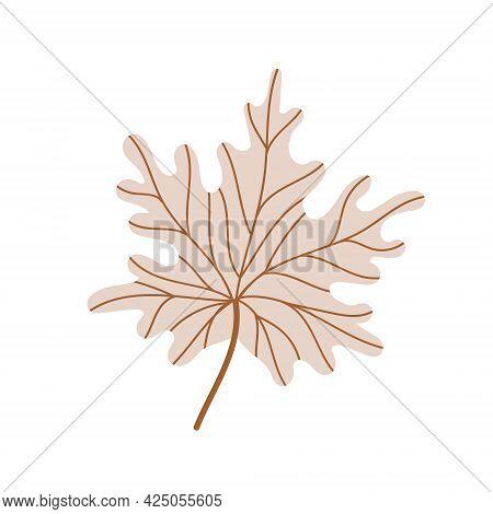 A Fallen Maple Leaf.autumn Foliage. Vector Illustration.