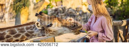 Banner, Long Format Happy Young Woman Watching And Feeding Giraffe In Zoo Wearing A Medical Mask Dur