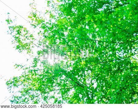The Abstract Spring Or Summer Background Of The New Leaves On The Tree Against The Sky. Poor Focus F