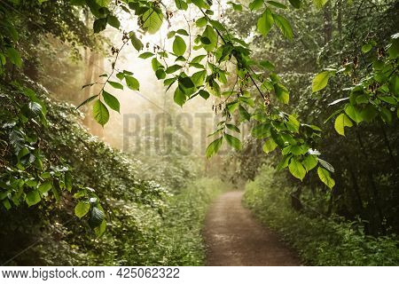 Sun Beams Shine Through The Leaves Of The Trees In The Park Illuminating The Dirt Road, Summer Lands