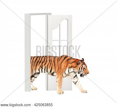 Tiger enters in open door. Opportunities, nature and ecology concepts. Tiger walking through doorway. Isolated on white background. 3d render