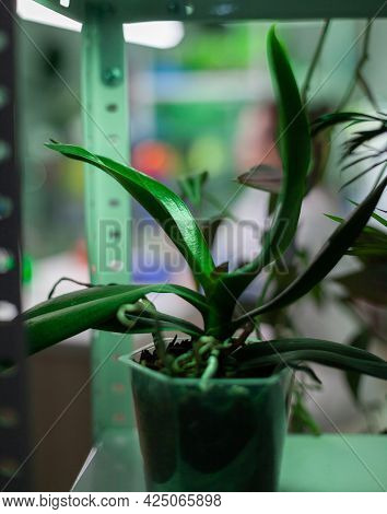 Pots With Plants In Biology Experiment Laboratory, Scientific Research Place. Green Botany Material