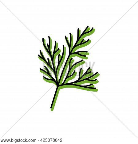 Dill Herbs. Vegetable Sketch. Color Simple Icon. Hand Drawn Vector Doodle Illustration