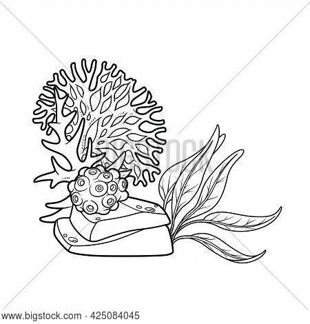 Algae And Corals Grow On A Sandstone Coloring Book Linear Drawing Isolated On White Background