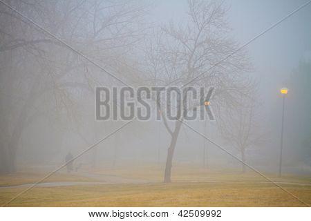 Foggy Park Morning