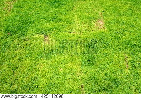 Grass Golf Courses Green Lawn Pattern Textured Background. Green Grass Texture Background Top View O