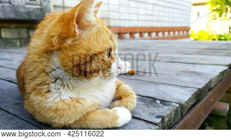 The Cat Lies On A Wooden Background. A Ginger Kitten Is Resting On The Porch Of A Private House. The