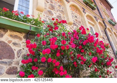 Red Flowers On The Wall Of The City Hall In Meppen, Germany