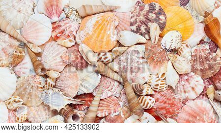 The Background With Various Seashells (murex Trapa, Nutmeg, Auger, True Tulip And Scallops), Summert