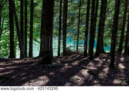 The Forest Around The Lake Pra Da Stua In The Province Of Trento