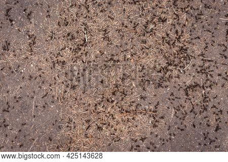 Many Ants Are Crawling On The Ground