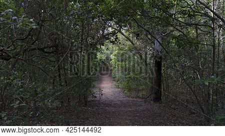 A Walking Track Through Bushland With Early Morning Light Through The Tree Branches