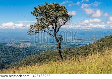 A Lone Tree On Doi Luang Phayao National Park One Of The Largest National Parks In Northern Thailand