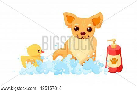 Dog Grooming In A Bath With Shampoo And Duck. Chihuahua In Soap Foam Isolated In White Background. V