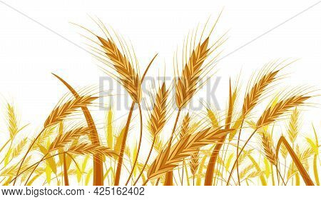 Wheat In The Fields. Nature Banner With Ear Harvest. Whole Stalks, Wheat Ears Spikelets With Seeds I