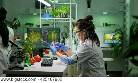 Front View Of Woman Researcher Analyzing Petri Dish With Vegan Meat Typing Biological Expertise On C