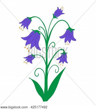 Peach Leaved Bellflower Campanula Persicifolia Isolated On White Background