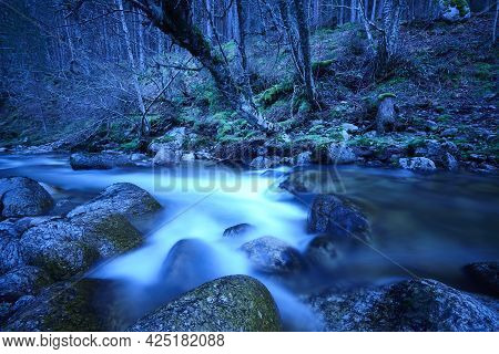 Forest And Creek By Night. Lozoya River In Madrid. Spain