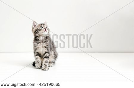 Small Tabby Kitten On White Background. Cute Gray Cat Kid Animal With Interested, Question Facial Fa