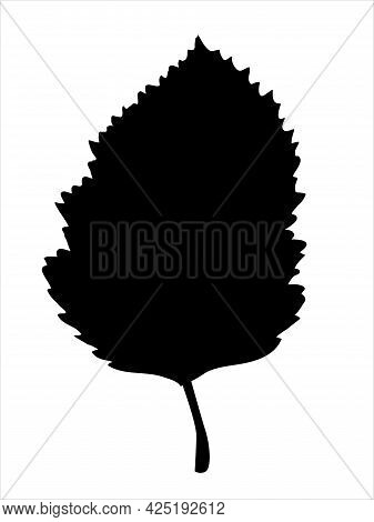 Hawthorn Leaf In The Doodle Style. Hand-drawn Silhouette With A Berry.  Botanical Medicinal Vector P