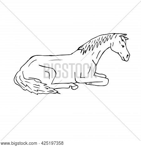 Vector Hand Drawn Doodle Sketch Laying Horse Isolated On White Background