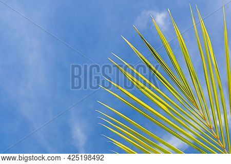 Green Leaf Of A Palm Tree Against The Blue Sky.