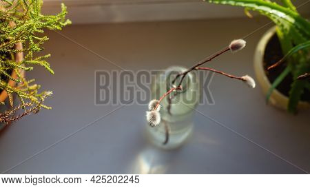 A Sprig Of Willow With Fluffy Silver Buds In A Glass Bottle On The Window In Spring.
