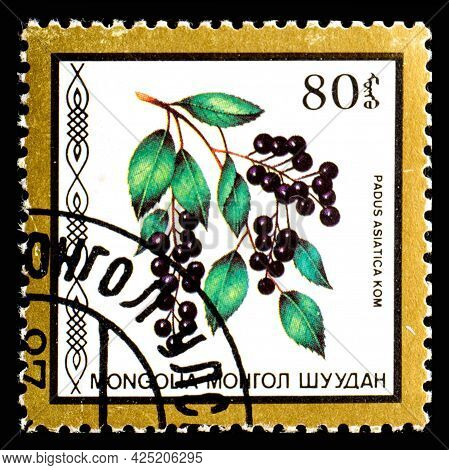 Mongolia - Circa 1986: A Postage Stamp From Mongolia Showing Berries Padus Asiatica Kom