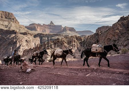 Grand Canyon National Park, United States: March 7, 2021: Mules Heading Up South Kaibsb Trail In The