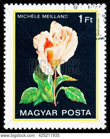 Hungary - Circa 1982: A Postage Stamp From Hungary Showing Flowers Michele Meilland
