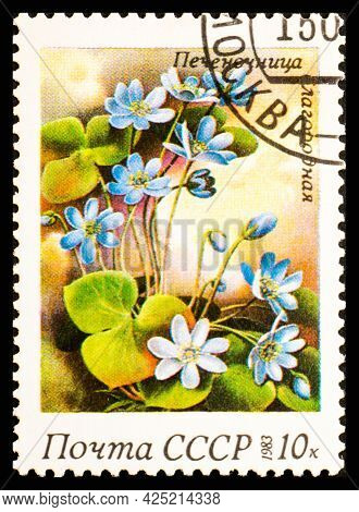Russia, Ussr - Circa 1983: A Postage Stamp From Ussr Showing Flowers Hepatica Nobilis