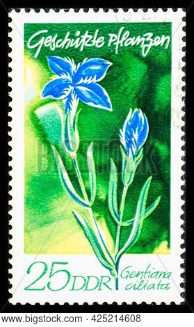 Germany, Ddr - Circa 1970: A Postage Stamp From Ddr Showing Flowers Gentiana Ciliata