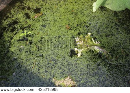 Overgrown Water In The Green. Ecology. Ecosystem. Saving Water Natural Resources