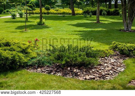 Evergreen Thuja Bush With Tree Bark Mulching In A Park With Green Lawn And Trees In The Background,